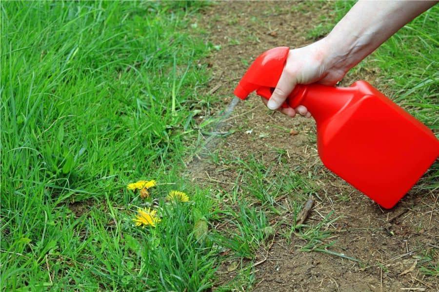 Как избавиться от сорняков с помощью уксуса