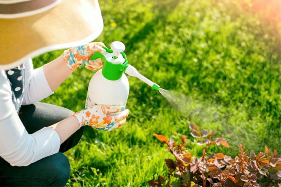 Способы борьбы с вредителями растений